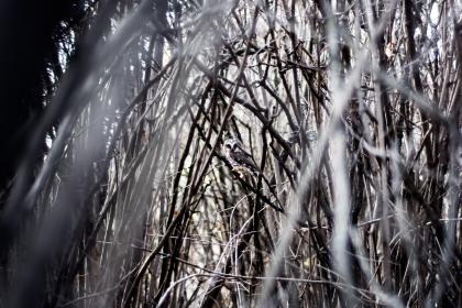 nature, branches, twigs, stems, trees, outdoors, bird, owl