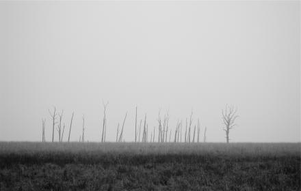 grass, field, grey, black and white, trees
