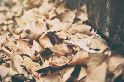 leaves, dried, autumn, fall, summer, nature, brown