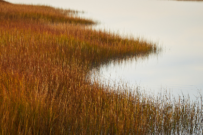 marsh,   field,   nature,   water,   countryside,   lagoon,   lake,   reserve,   landscape,   grass,   outdoor,  golden,  autumn,  shore,  coast,  nature