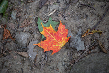 fall,  leaf,  nature,  colorful,  	autumn,   minimal,  plant,  soil,  leaves,  outdoor,  forest,  tree,  natural,  pattern,  land, foliage, season