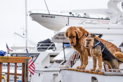 animals, dogs, domesticated, pets, adorable, cute, muzzle, leash, nautical, yachts, flags, table, white