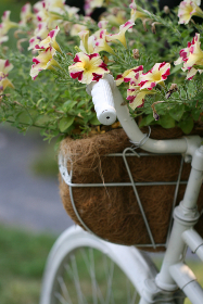 old,   bicycle,   flowers,   retro,   decoration,   basket,   vintage,   outdoors,   antique,   summer,   plant,   nature