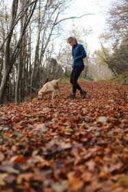 dog, walking, hiking, pet, animal, nature, outdoors, fall, foliage, woman, girl, trees, forest, path, leaves, environment