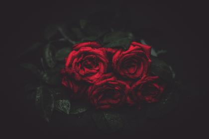 red, roses, flowers