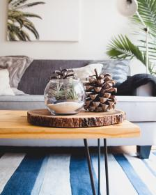 house, interior, couch, sofa, living, room, wooden, table, glass, display, conifer, cone, plant