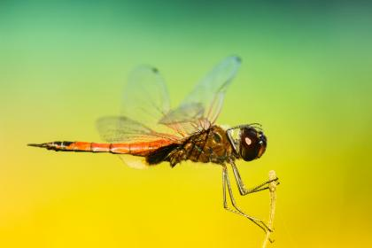insects, dragonfly, wings, colors, patterns, gradient, still, bokeh