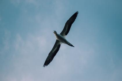 bird, beak, feather, animal, fly, freedom, clouds, sky