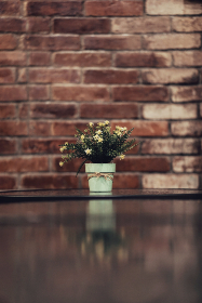 flowers,   pat,   plant,   bricks,   relection,   minimal,   leaves,   nature,   rustic,   table,   wall