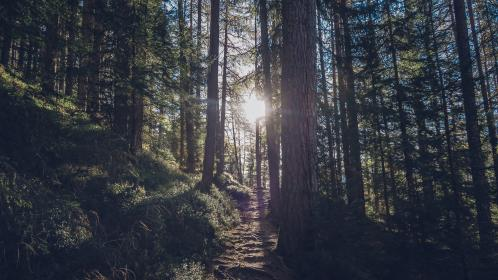 nature, forests, trees, roads, paths, stairs, dirt, soil, grass, trunks, branches, leaves, sun, peek
