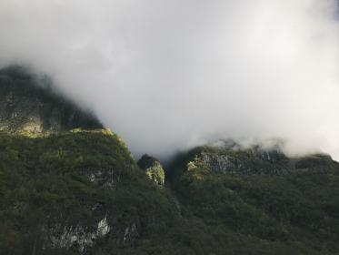 mountain, trees, plant, nature, landscape, forest, fogs, cold