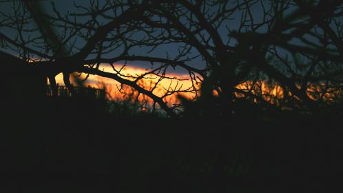 trees, branches, dark, sunset, clouds, creepy, nature, silhouette