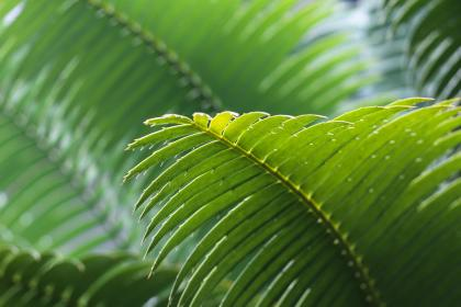 free photo of green  leaves