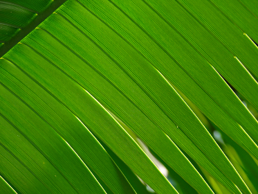 green,   leaf,   abstract,   background,   natural,   pattern,   backlit,   leave,   plant,   nature,   detail,   design,   close up