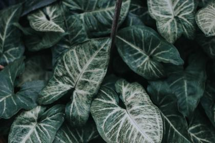 free photo of leaves  green