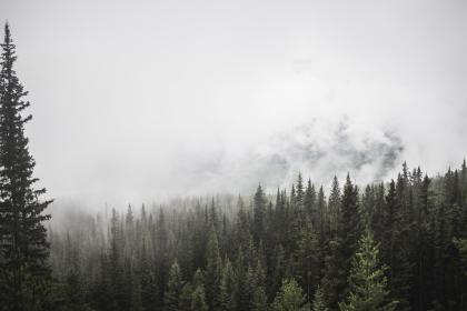 forest, mountain, trees, pine, fog, clouds, sky, green white, view