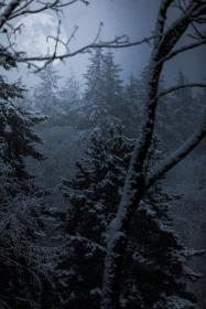 trees, plant, forest, fog, cold, weather, snow, winter