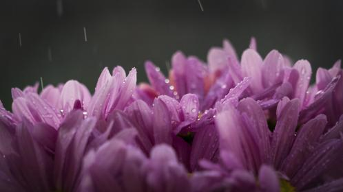 flowers, nature, purple, blossoms, bed, field, spring, summer, branches, outdoors, bokeh, raindrops, water, droplets