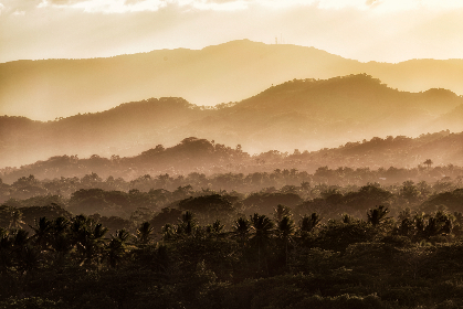 tropical,  mountain,  forest,  gradient,  nature,  outdoors,  palm trees,  sunlight,  trees,  countryside,  layers,  scenic,  view