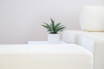 house,  plant,  interior,  white,  minimal,  design,  decor,  decoration,  vase,  pot,  table,  couch,  chair,  indoor,  modern