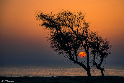 iran gheshm island, sunset, tree, evening, dusk, red sky, red, sky, clear