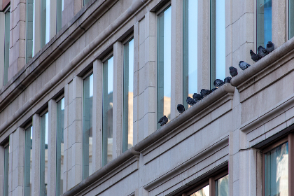 building,  exterior,  architecture,  ledge,  birds,  facade,  windows,  structure,  city,  pigeons,  urban,  animal,  flock,  outdoor,  dove