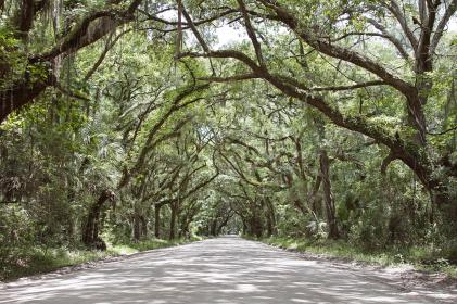 green, trees, plant, nature, forest, road, travel, outdoor, path