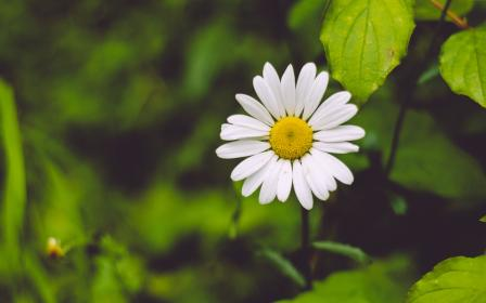free photo of flower  nature