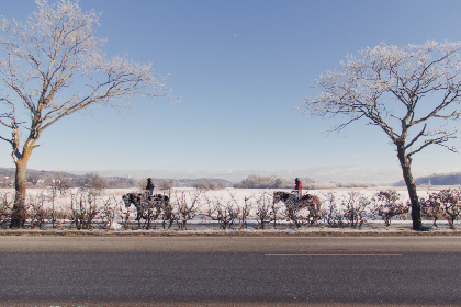 horse, ride, winter, snow, cold, road, trees, people, ice, sky, outdoors