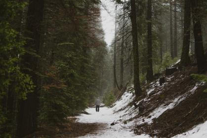 people, man, alone, walking, snow, fog, sky, plants, grass, trees, pine, forest, nature
