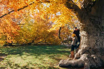 tree, plant, nature, green, grass, outdoor, leaf, fall, autumn, people, couple, man, woman, adventure, travel, laugh, happy