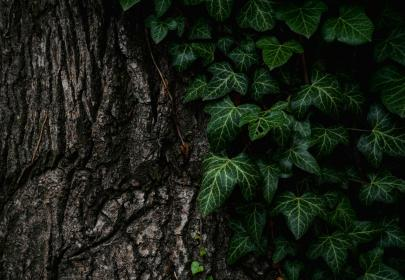 tree, leaves, nature, bark, texture, pattern, green, brown
