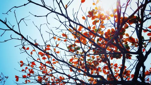 nature, trees, leaves, branches, twigs, sky, sun, light, peep, autumn, fall