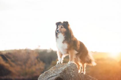 sky, sunrise, rock, outdoor, dog, puppy, pet, animal, blur
