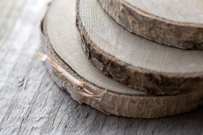 birch,  wood,  slices,  lumber,  trees,  close up,  macro,  texture,  woodgrain,  bark,  crafts,  diy,  rustic