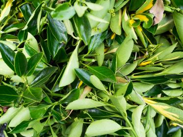 nature, plants, leaves, stems, compressed, green