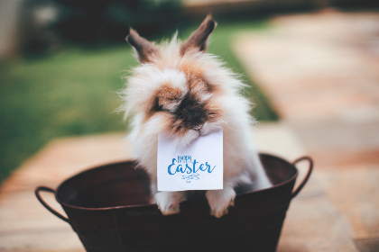 happy easter,  sign,  rabbit,  bucket,  pet,  animal,  easter,  vacation,  adorable,  cute,  furry,  green grass,  green,  grass