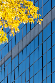 office,   exterior,   facade,   pattern,   modern,   business,   building,   wall,   architecture,   city,   urban,   corporation,   design,   downtown,   autumn,  glass,  windows
