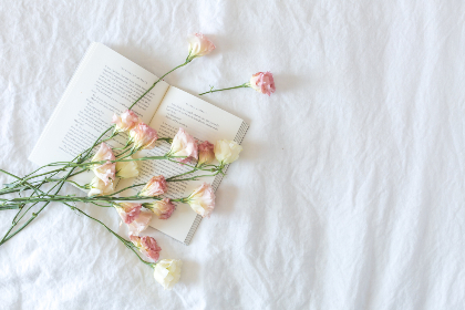 bed,  flowers,  book,  light,  cozy,  morning,  relax,  calming,  leisure,  reading