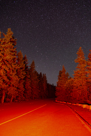 stars,  night,  trees,  sky,  nature,  outdoors,  road,  red,  light,  forest,  travel,  exploration,  constellations,  space,  adventure