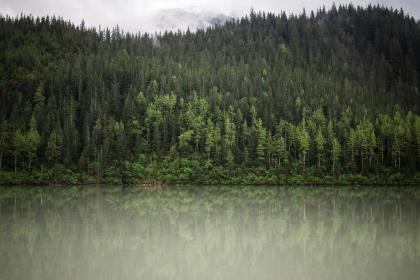 green, trees, plant, nature, forest, lake, water, reflection