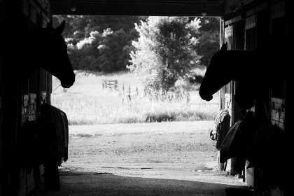 free photo of horses   barn