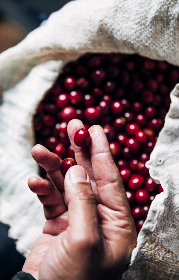 red,  coffee,  beans,  hand,  holding,  sack,  bag,  fresh,  roast,  brew,  latte,  cappuccino,  espresso,  cafe,  restaurant,  organic,  natural,  harvest,  arabica,  caffeine,  aroma,  flavor,  mocha,  raw