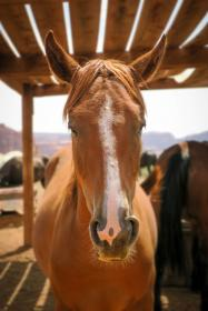 horse, animal, field, farm, livestocks