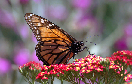 free photo of 	butterfly    insect