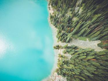 pine, trees, leaves, plants, forest, water, sea, ocean, blue, coast, nature, aerial, view