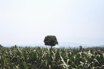 free photo of nature  field