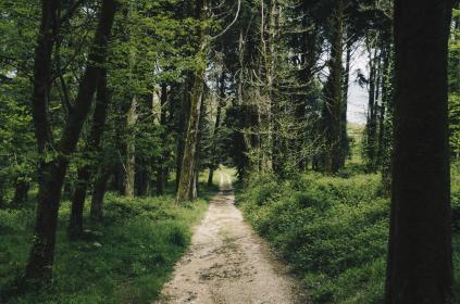 free photo of nature  forests