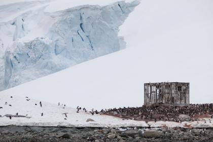 snow, winter, rocks, stone, birds, animal, penguin, outdoor, nature, white, iceberg