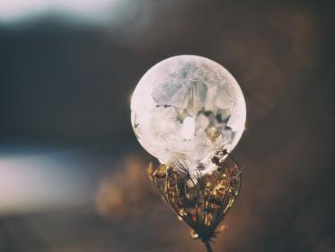crystal, ball, glass, round, plant, bokeh, blur, stem, leaves